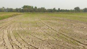 קרקע חקלאית לפני הפשרה